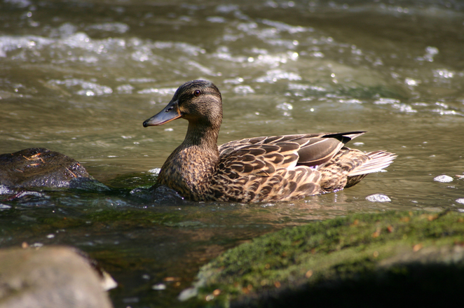 Website conversion like a duck to water